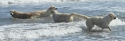 The girls having fun in the sea